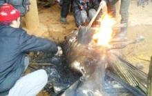 Hơn 100 con trâu, bò tại Thanh Hóa chết rét