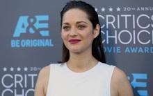 Marion Cotillard phủ nhận phá hoại hôn nhân Jolie - Pitt
