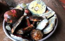 Nấm gan bò 800 ngàn đồng/kg, người Hà Nội Hà tranh nhau mua