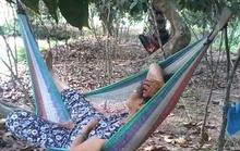 Không chịu nổi nắng nóng, dân miền Tây ra vườn ngủ