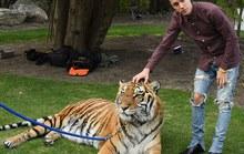 Khoe ảnh chụp cùng hổ, Justin Bieber bị chỉ trích