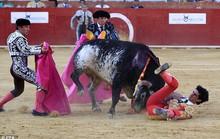 Đấu sĩ bị bò húc thiệt mạng trên sân