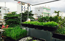 Vườn rau đủ 15 người ăn của hot girl Sài thành