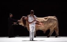 """Bị """"ném đá"""" vì mang bò sống lên sân khấu"""