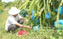 Loay hoay chặt - trồng, nuôi - bỏ (*): Lên bờ xuống ruộng vì theo phong trào