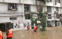 Trung Quốc: Lụt lớn đẩy cá sấu ra đồng