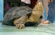Chủ nuôi đi cùng công an đến xin lại con rùa nặng 14 kg