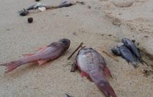 Cá chết bất thường đầy bờ biển miền Trung