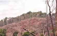 20 năm, mất cả triệu hecta rừng
