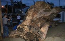 Phải giữ rừng bằng bàn tay sắt