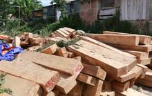 Phát hiện thêm hàng chục phách gỗ pơ mu sát vách biên phòng