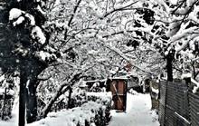 Nghẹt thở vì vẻ đẹp của ngôi làng tuyết phủ ở Ấn Độ