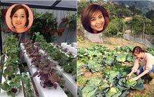 Thăm vườn rau của Vàng Anh Minh Hương và Hoàng Thùy Linh