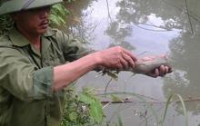 Nhà máy luyện đồng giết cá