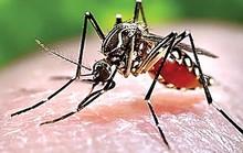Cách phát hiện sớm sốt xuất huyết
