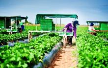 200 người Việt có thể đến Úc du lịch và làm việc từ 1-7