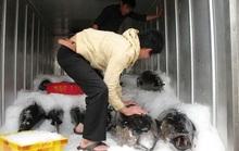Xuất khẩu cá ngừ sang Trung Quốc tăng vọt