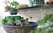 Bonsai tiền triệu bay lơ lửng hút khách hiếu kỳ
