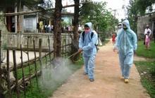 Quảng Trị: Hơn 400 người mắc sốt xuất huyết