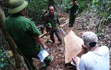 Biết phá rừng từ lâu nhưng khó chỉ đạo!
