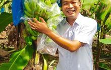 Chuối FOHLA - tự hào  trái cây Việt