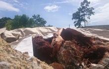Vụ chôn chất thải trái phép ở Đà Nẵng: Có thể chịu phạt  2 tỉ đồng