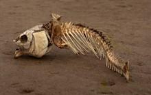Vùng biển chết bí ẩn xâm lấn vào Đông Nam Á