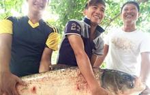 Ly kỳ săn cá khủng trên sông