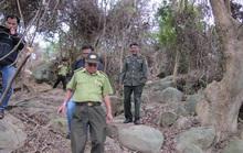 Chủ tịch Đà Nẵng yêu cầu khởi tố vụ phá rừng Sơn Trà