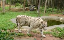 Khó rời mắt với vườn thú hoang dã ở Phú Quốc