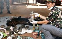 Nhà sư Thái Lan tìm cách tẩu thoát cùng với da, nanh hổ