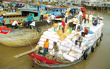 Thương lái bất nhân, tráo tiền mua lúa