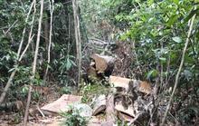 Cán bộ quản lý rừng bị nhóm đối tượng nghi lâm tặc chém chết