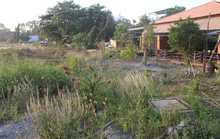 Dự án lấp sông Đồng Nai: Sông kia rày đã nên đồng!