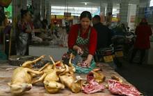 Phớt lờ phản đối, lễ hội thịt chó Trung Quốc vào mùa