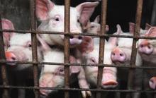 Lạm dụng kháng sinh cực mạnh tăng kỷ lục ở châu Âu