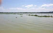 Xô xát trên hồ Trị An, một kiểm lâm bị thương