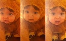 Tiếng gầm của sư tử nhí đáng yêu hút 23 triệu lượt xem