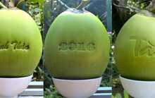 300.000 đồng một trái dừa Tài Lộc
