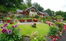 Khu vườn tuyệt đẹp đầy kỷ niệm của người đàn ông 75 tuổi