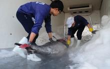 Cá ngừ đại dương: Hàng chục tấn chỉ xuất khẩu... vài trăm ký!