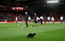 Những động vật thích xem thể thao