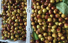 Sốt táo Trung Quốc chữa đau đầu (?)