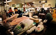 Thăm chợ cá ngừ Tsukiji lớn nhất thế giới