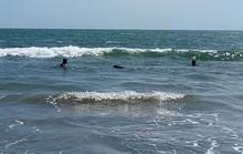 Hải cẩu xuất hiện ở vùng biển Bình Thuận