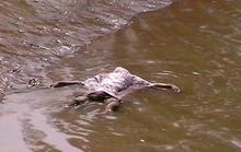 Sau 3 ngày mất tích, xác học sinh nổi trên mặt nước