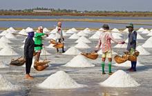 Sản xuất muối bằng phương pháp trải bạt chiếm 70%