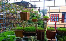 Bà mẹ Lào Cai trồng rau mầm kín bậu cửa sổ