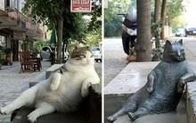 Mèo ú bất hủ ở Istanbul được tạc tượng