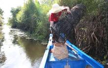 Mùa nước nổi sớm - Đặc sản lạ xứ U Minh
